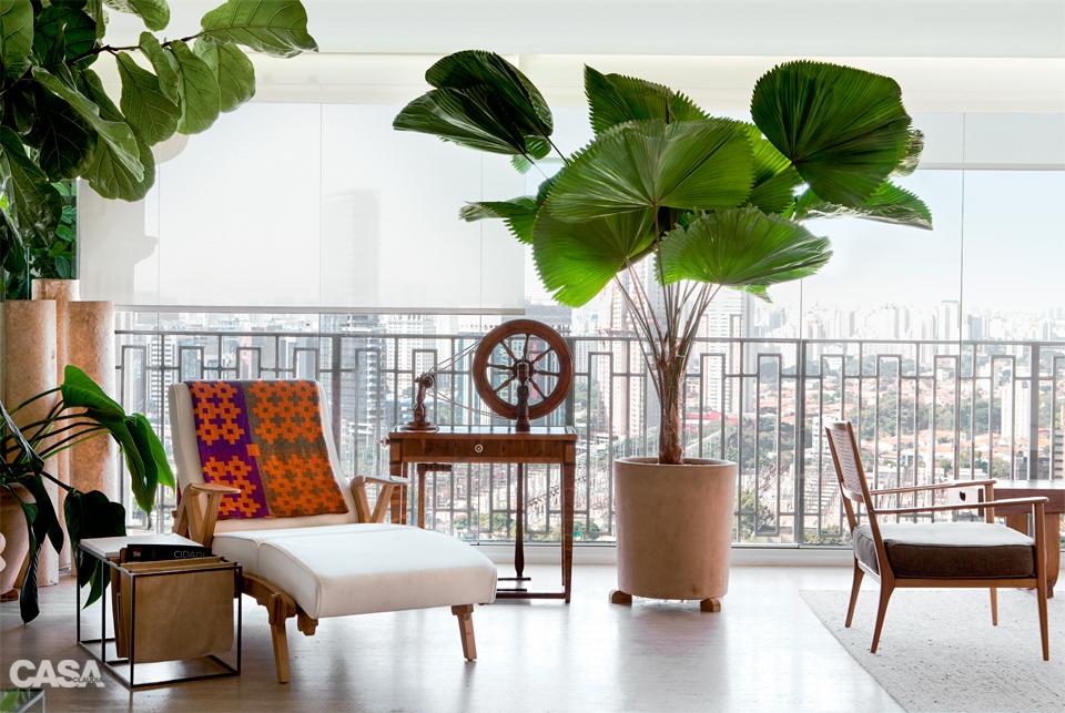 Resultado de imagem para Palmeira-leque na decoração